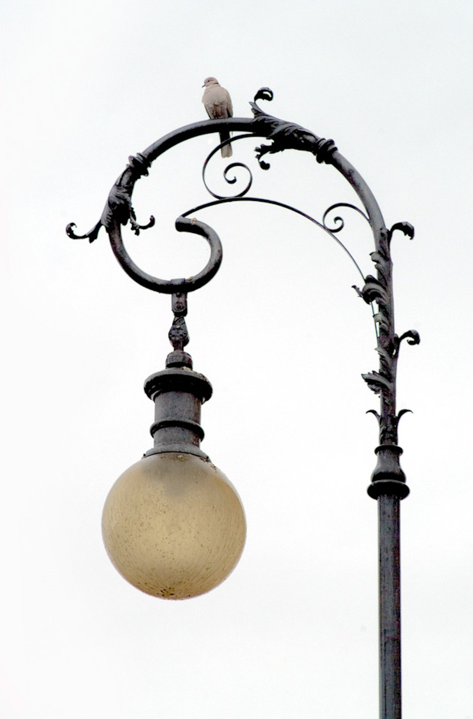 Italy_Lamp with Pigeon.jpg