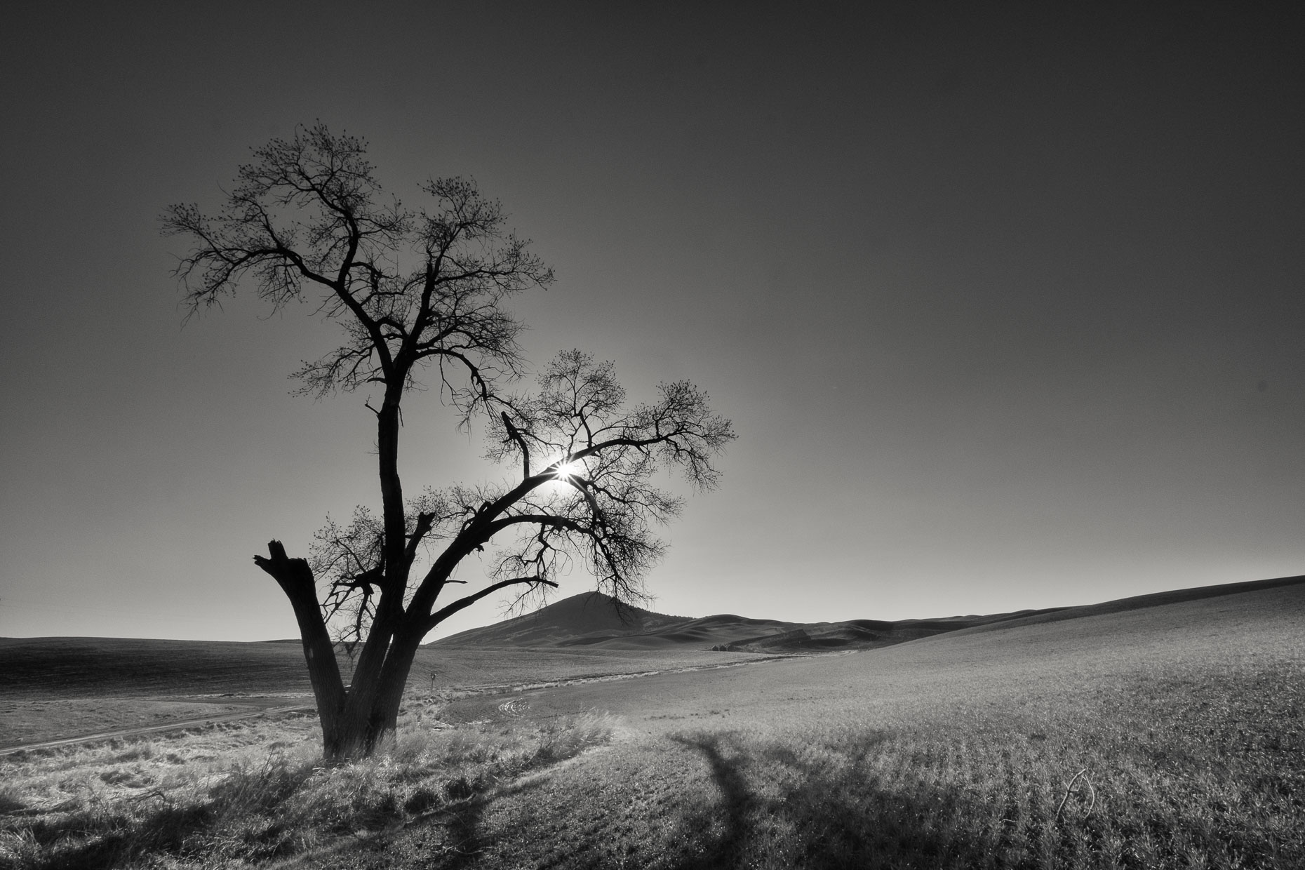 Palouse_Split_Tree_Steptoe_WA--APF1860px