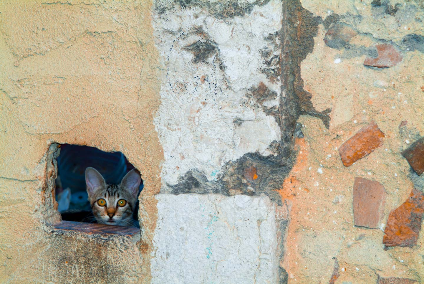 Portugal,_cat_peeking_through_hole-24.jpg